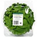 Lettuce Boston Living Organic