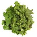 Lettuce Green Leaf Organic