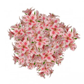 FTD Alstroemeria (Colors May Vary)