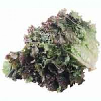 Lettuce Red Leaf Organic