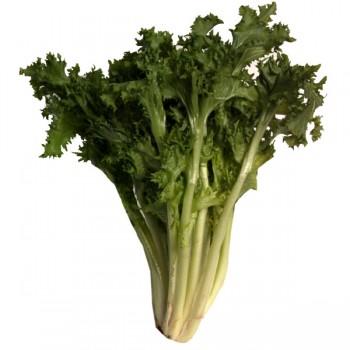 Lettuce Endive Curly