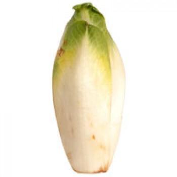 Lettuce Endive French Belgian
