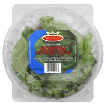 Lettuce Boston Living