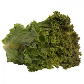 Lettuce Green Leaf